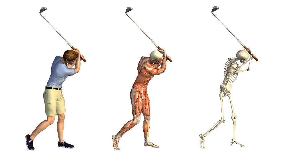 Golf swing with shoulder muscles
